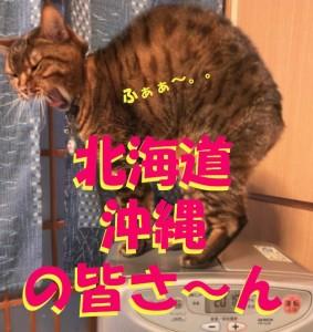 Cut2021_0203_1106_40
