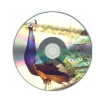 シルバーメディア/ 写真画質フルカラー
